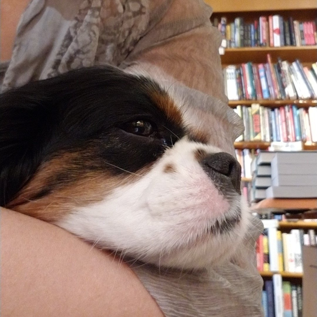 Shopdog Quincy is here all day giving out free kisses and snuggles. #dogslovebooks<br>http://pic.twitter.com/uAiAeamFYM