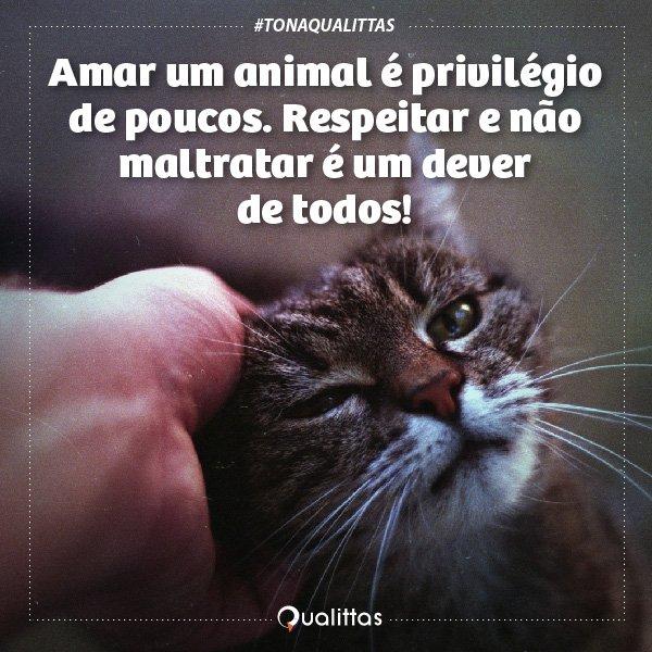T-dia+nacional+dos+animais%21-11
