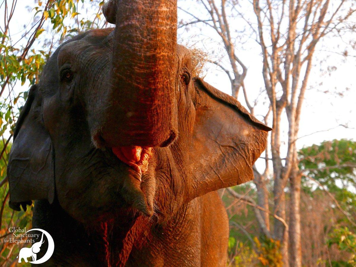 Global Elephants's photo on Grass
