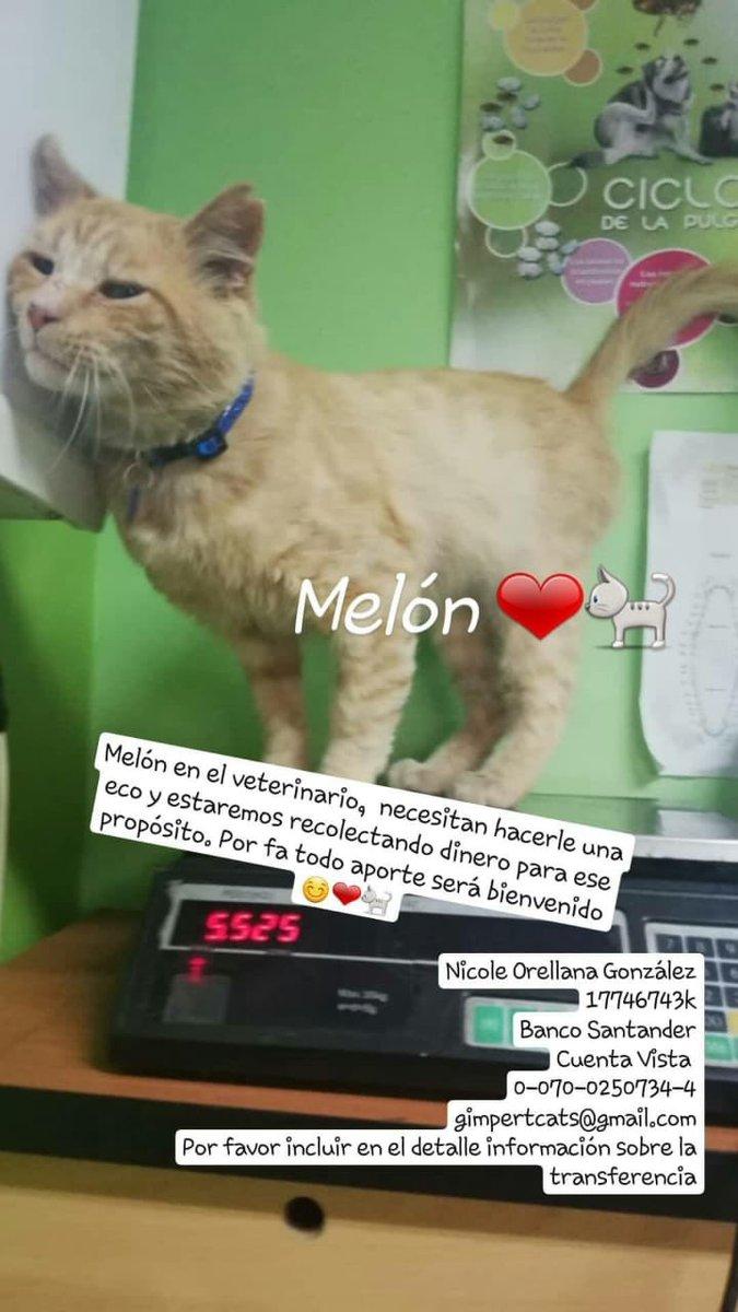 GimpertMiaus's photo on Melitón