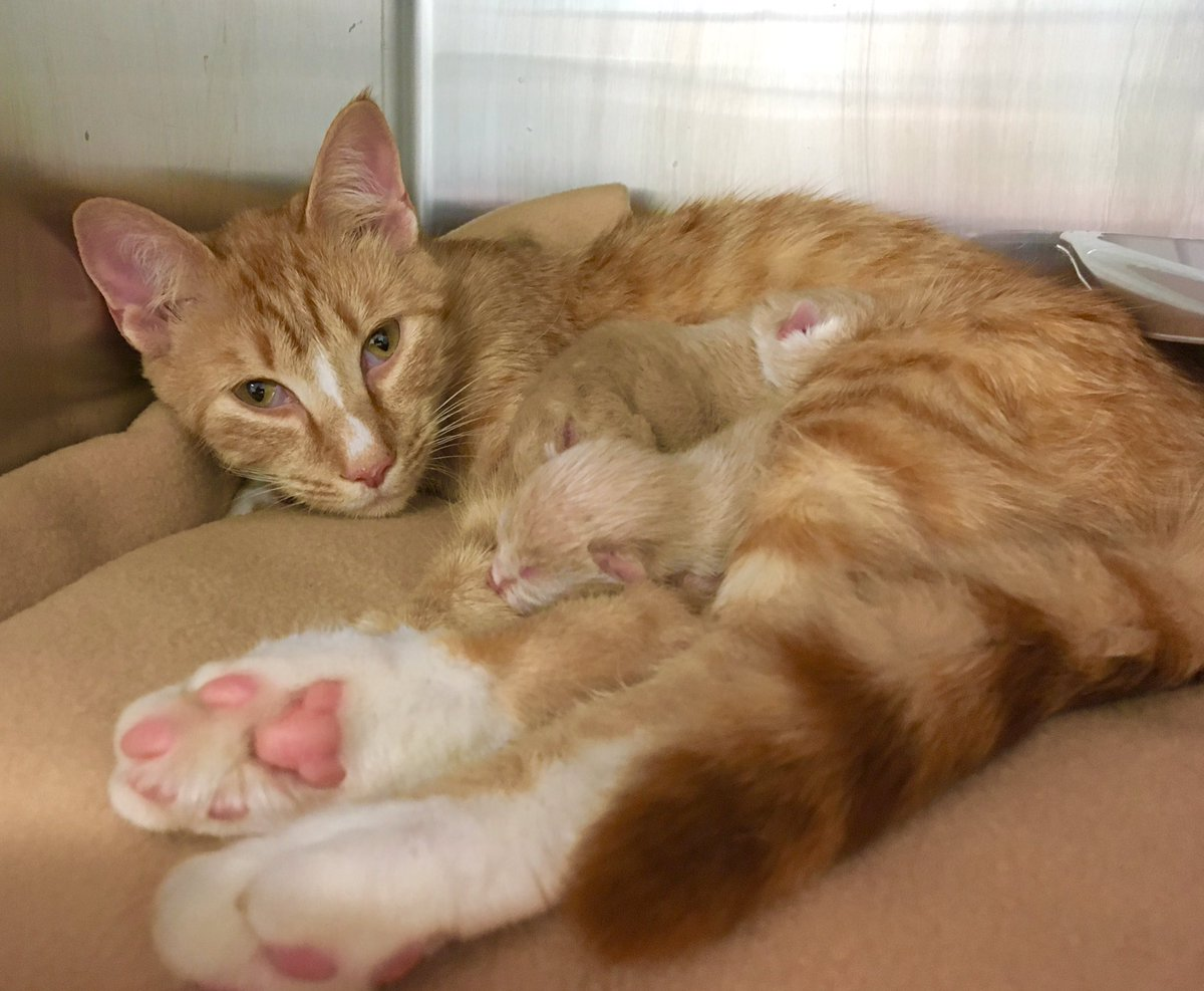 In honor of #PiDay2019, we're naming these three newborn kittens after some of our favorite pies!  What do you think we should name them? #AdoptDontShop<br>http://pic.twitter.com/tlpRkicQQM