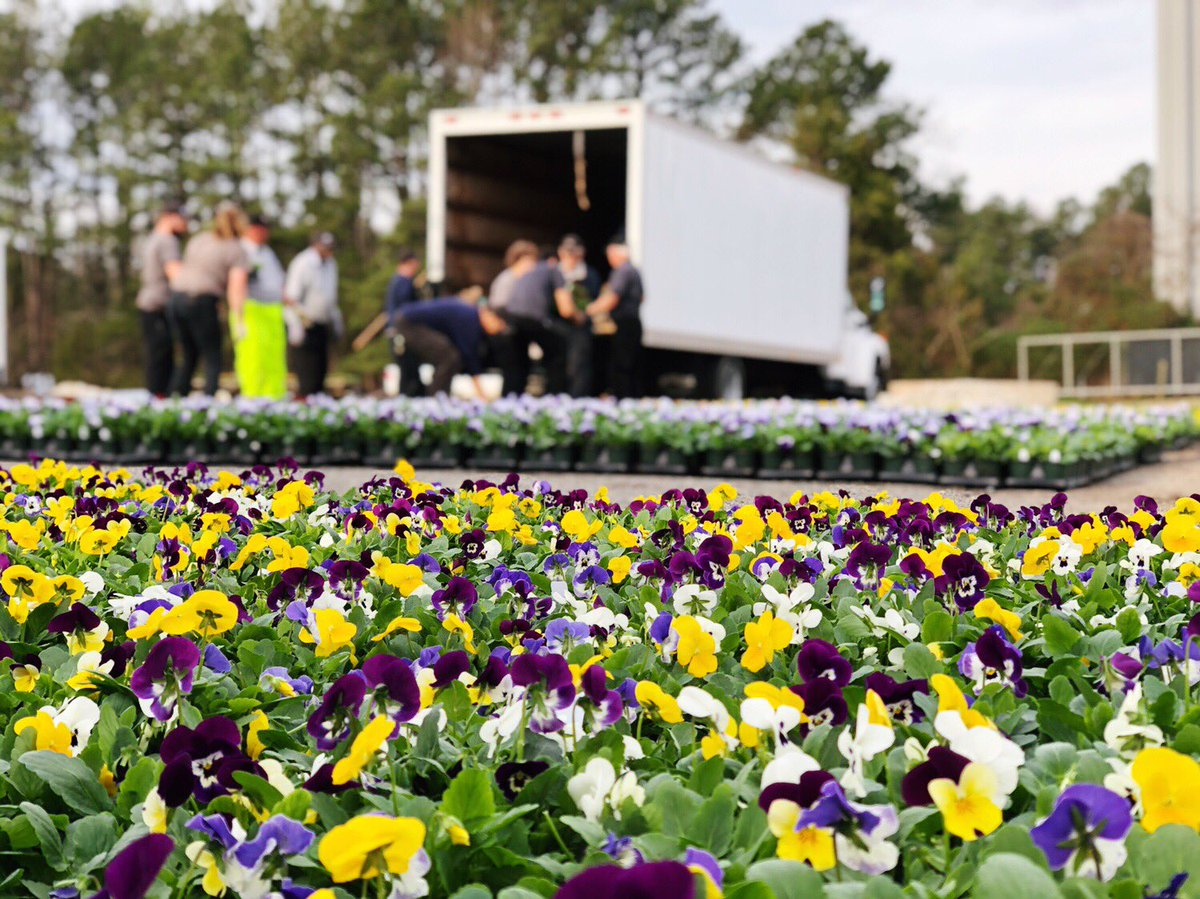 A fresh delivery like this can only mean one thing - only 15 days until Opening Day!  Our landscaping team has unloaded 25,000 pansies and violas to plant for the Spring! 🌸