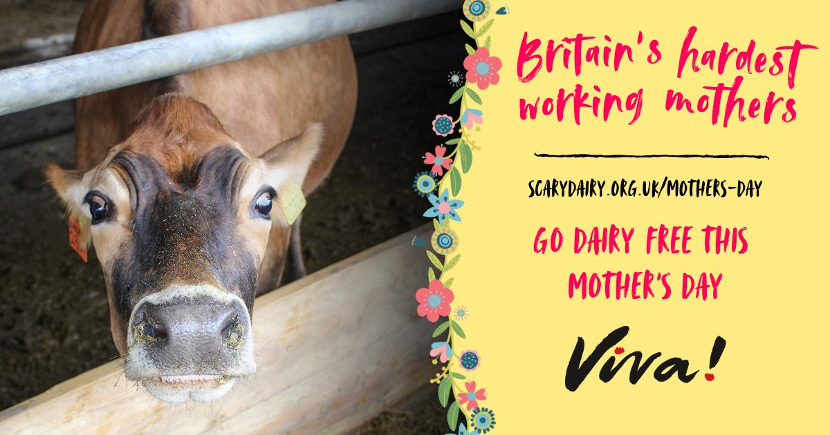 Mother's Day is just around the corner – 31 March!  Will you help us spread awareness and encourage people to go dairy-free for Britain&#39;s hardest working mothers?  Order your FREE action pack from:  http://www. scairydairy.org.uk/mothers-day  &nbsp;    #scairydairy #dairyfree <br>http://pic.twitter.com/LPgZ3iqi8P