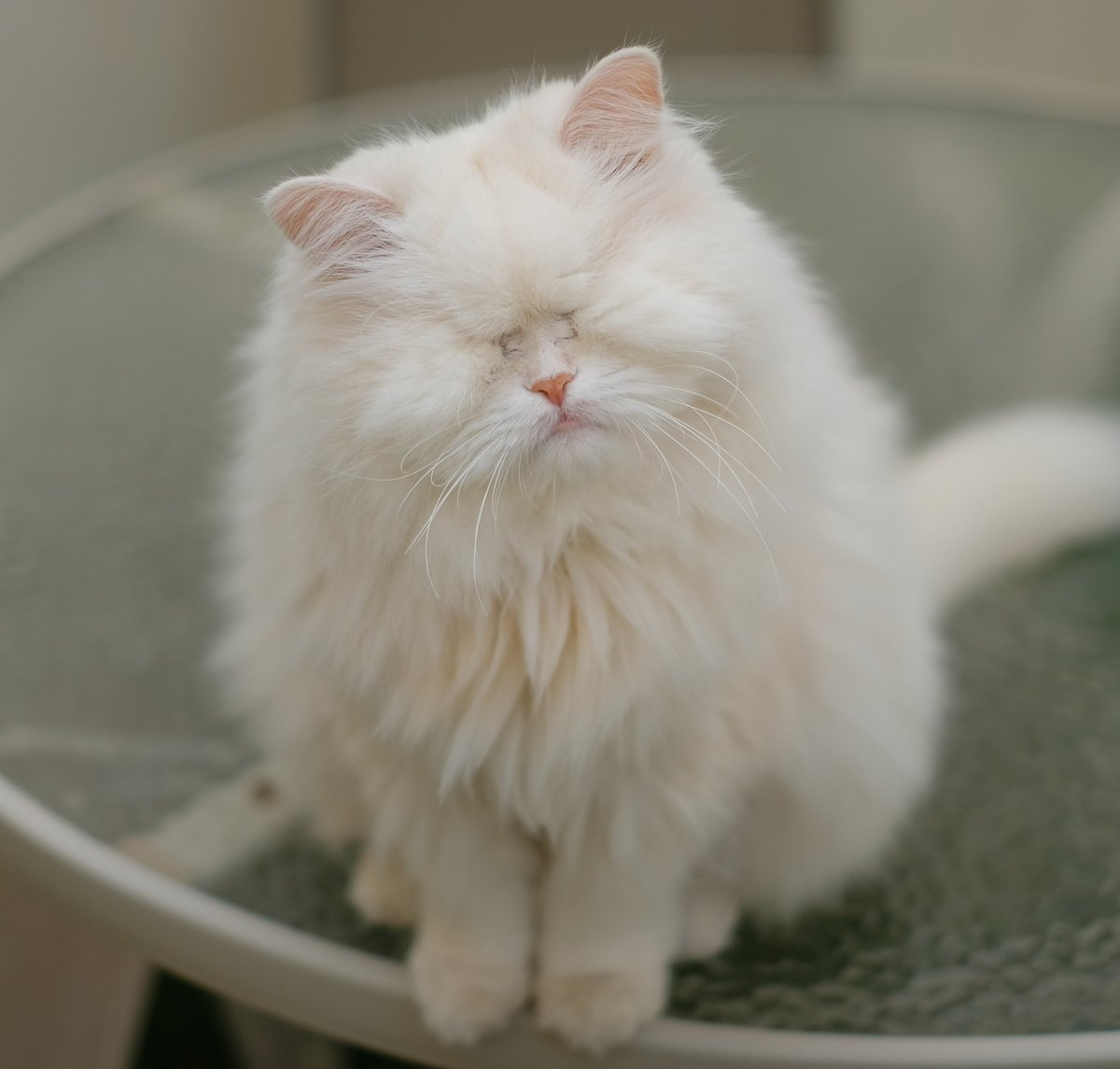 Are you talkin&#39; to me?  #jellybellyfriday #catsoftwitter #moetblindcat #catsofinstagram<br>http://pic.twitter.com/65hMt4YGpq