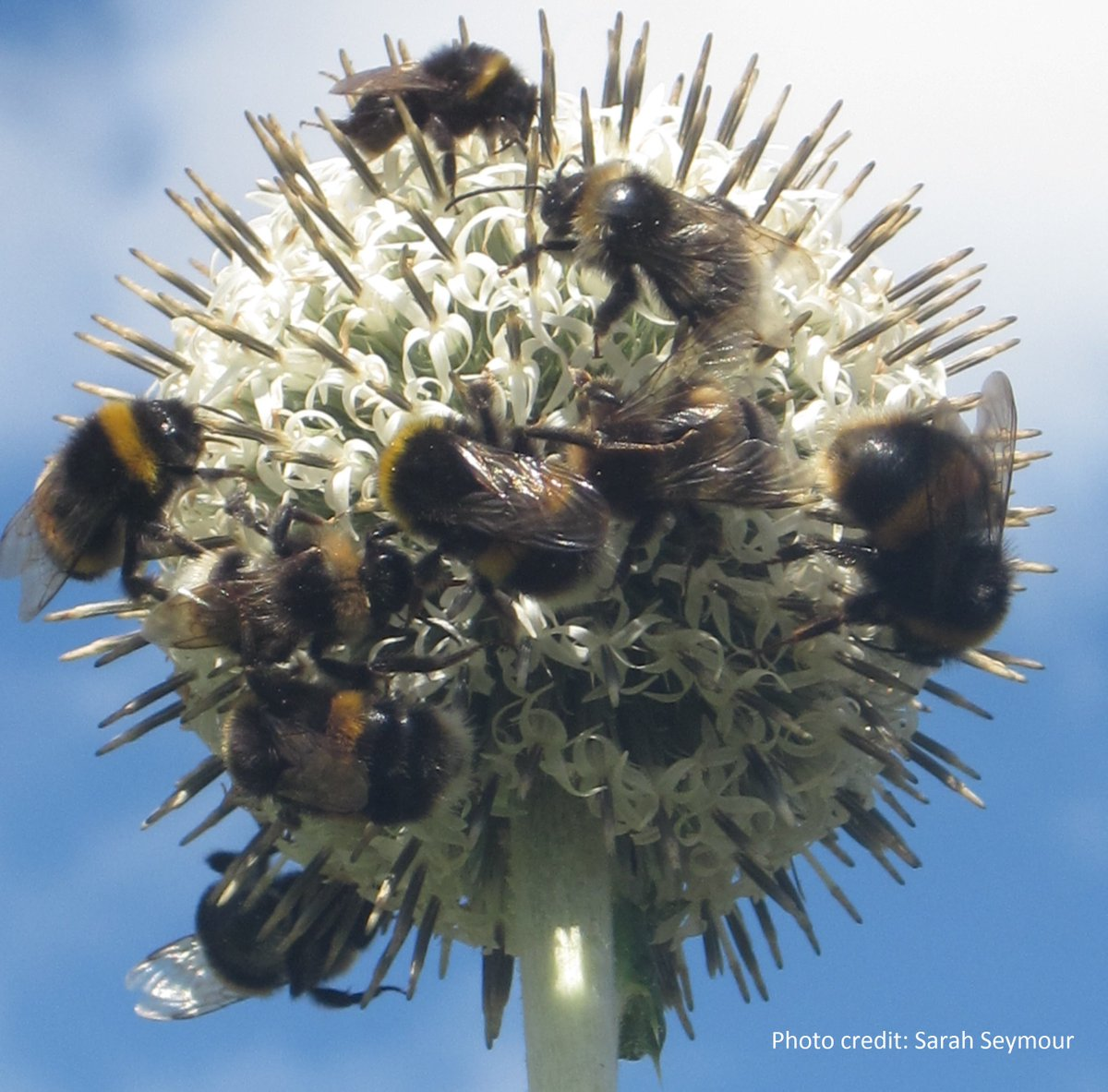 Would you like to join our growing team? We have a fantastic vacancy for a full-time, Digital & Operations Officer in our Stirling office. Deadline is Sunday 17 March. You can read more at: http://ow.ly/FzJV30o3p14 #bumblebees #conservation