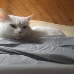 Image for the Tweet beginning: Bedmaking stops here 😸 Unite,