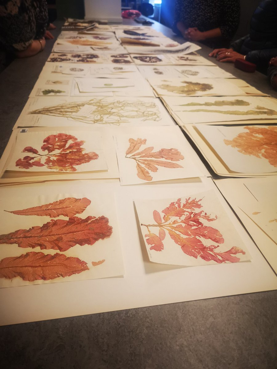 Huge thanks to Heleen @RBGE_Herbarium for showing us specimens of seaweeds collected from Edinburgh since the 19th century, many from Joppa.