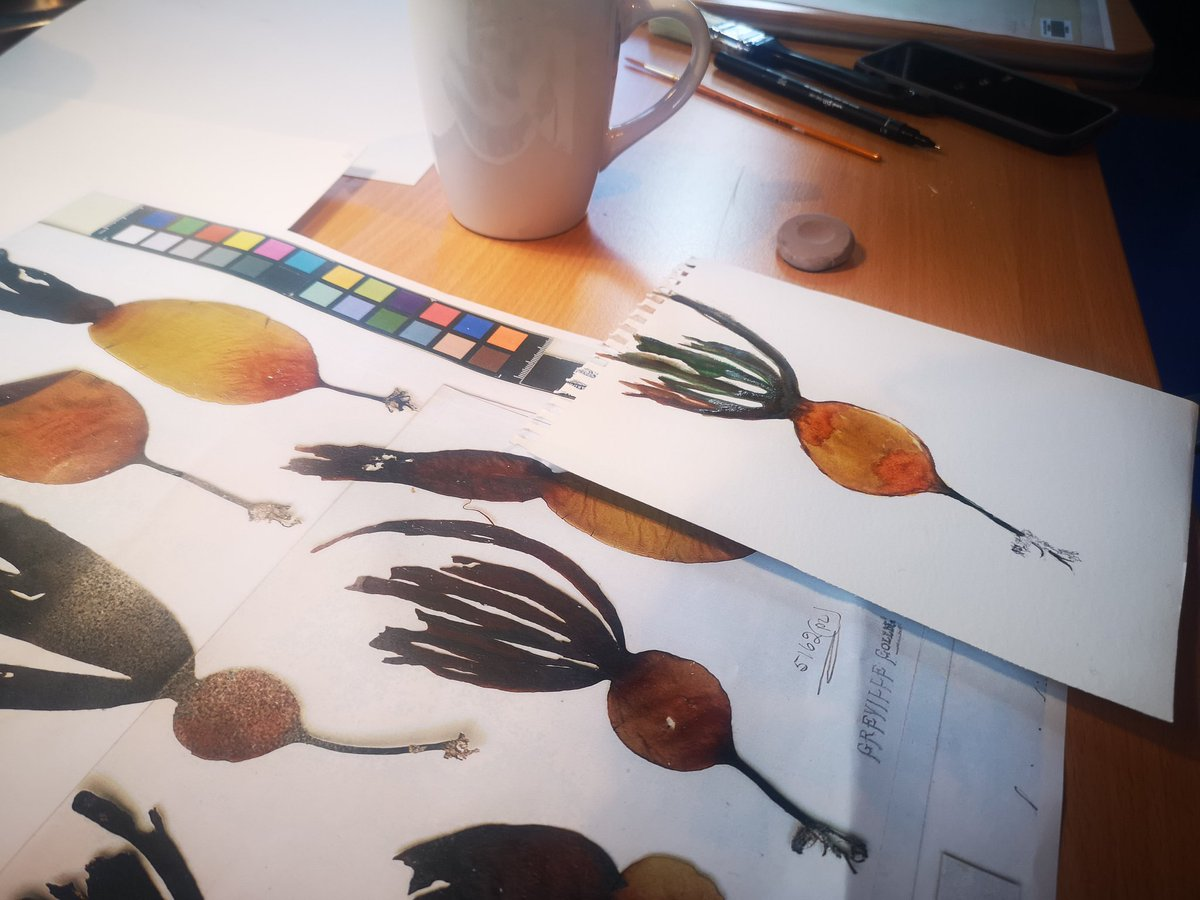 We're now over in the John Hope Gateway @TheBotanics having a go ourselves. Seaweed inspired watercolor is very therapeutic.