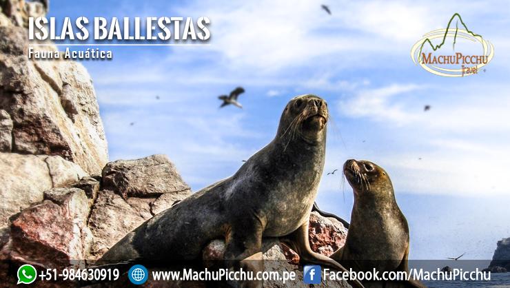 Machu Picchu Travel's photo on #estabasoñandoque