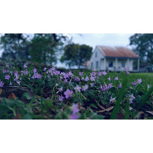Violet Vacherie. I adore this place. ift.tt/2JbHIM2