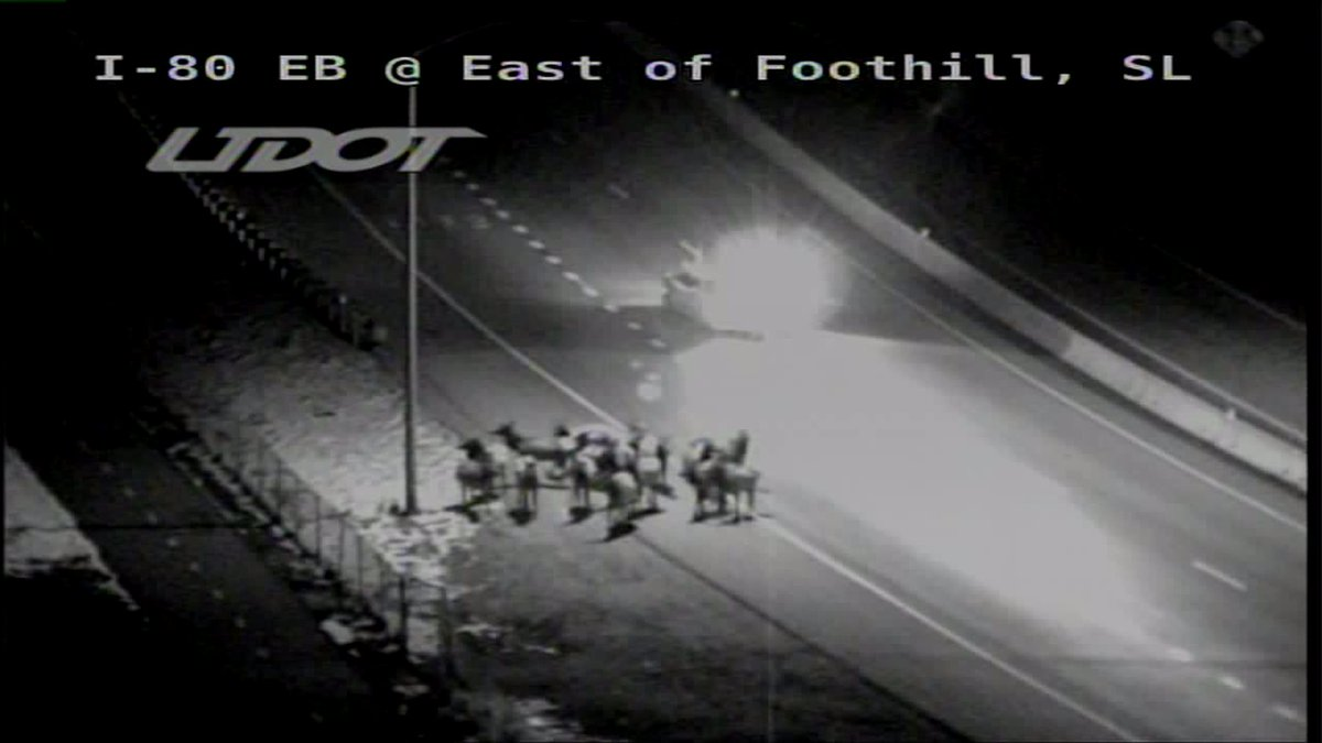PSA: I would like to take a moment to apologize to all those I offended by calling this group of animals on I-80 deer. It&#39;s dark and I&#39;m not a zoologist. I stand corrected. GANG OF ELK. Thank you. @fox13 #OhDeer <br>http://pic.twitter.com/3iqM3DBbX7