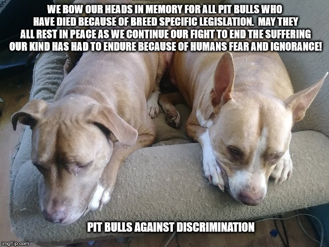 My boy's Luca Brasi and Chevy have a message they want to send to everyone this morning. They hope that one day it will be heard and no more dogs will have to suffer because of human arrogance and stupidity! #endbsl
