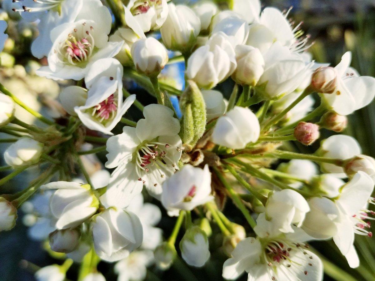 #FridayFeeling fresh bloomers <br>http://pic.twitter.com/2NxKFU1NRZ