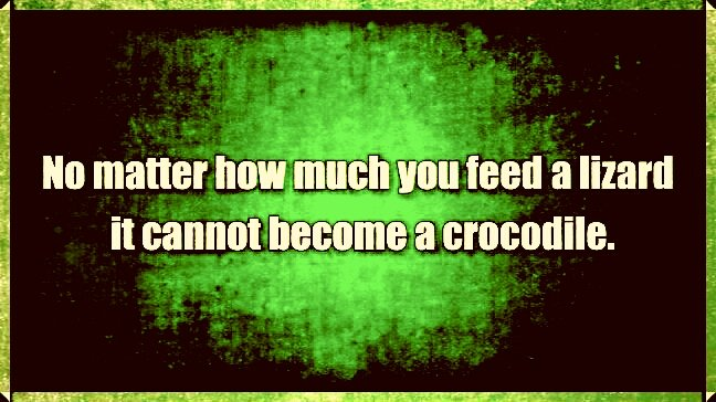 No matter how much you feed a lizard it cannot become a crocodile.  #FridayThoughts #quote<br>http://pic.twitter.com/8bJPwBQGUw