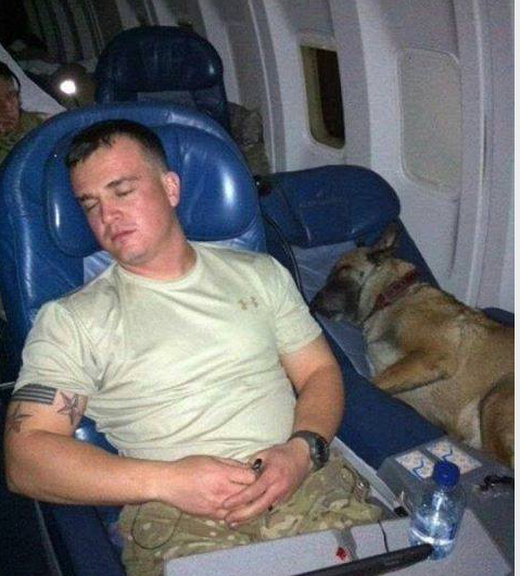 Two Lucky Soldiers: Headed Home from Overseas  The dog, who saved many lives, gets his own/well-deserved seat!  Please show your appreciation with a retweet   #WarriorDogs #BombSniffingDog #MilitaryDogs #GermanShepherd #SoldierAndHisDog #SoldierGoesHome #FridayFeeling <br>http://pic.twitter.com/JezdLr7EcH
