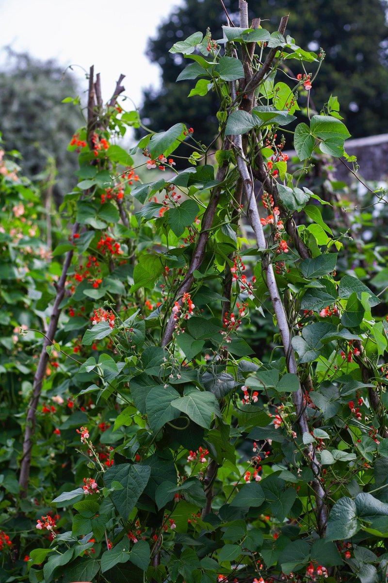 Parham House & Gdns's photo on #GardenersWorld