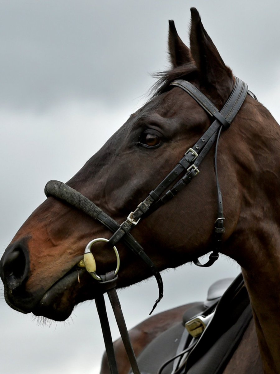 Cobajay Stables's photo on Paul Townend