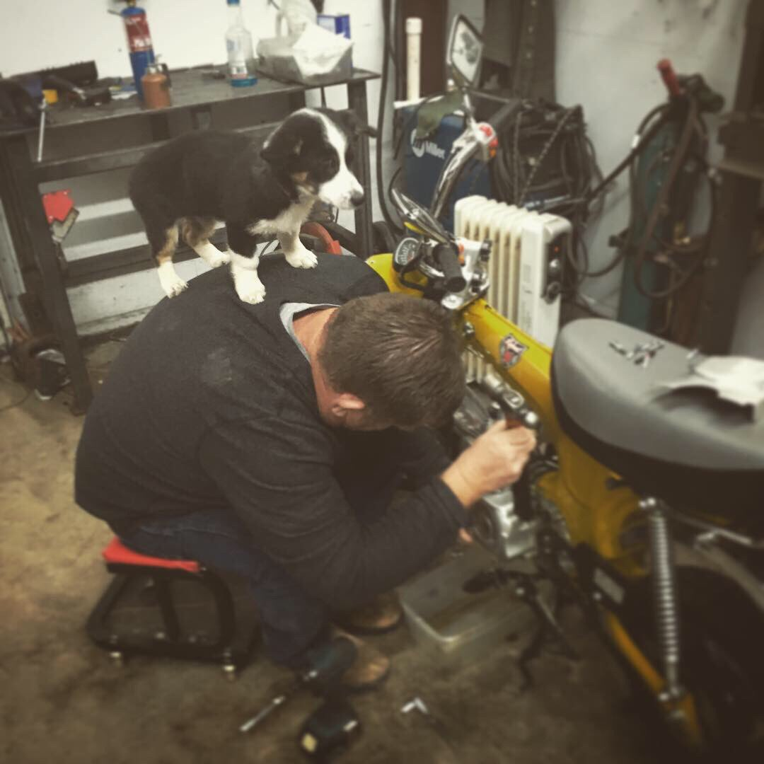 When you can't get the boss off your back... #shopdog #gettowork<br>http://pic.twitter.com/86X4bHftLO