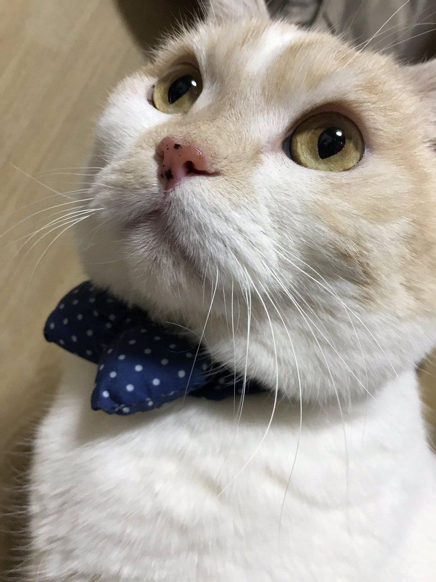 かめちゃんダイスケ、天使のノンちゃん's photo on ヒョウ