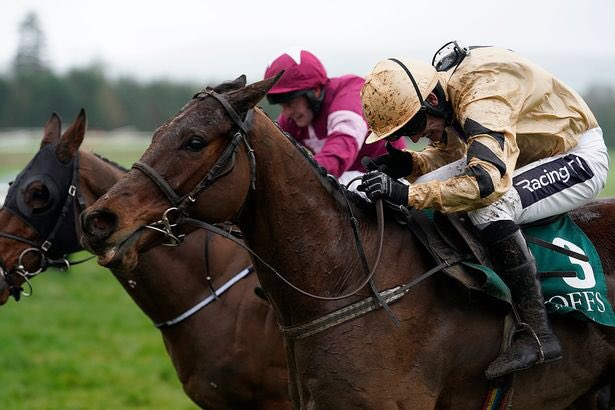Lilian Chan's photo on Willie Mullins