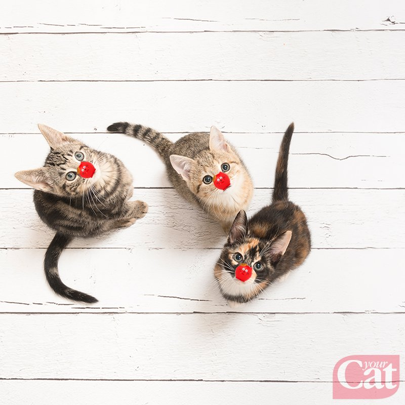 Your Cat's photo on #RND19