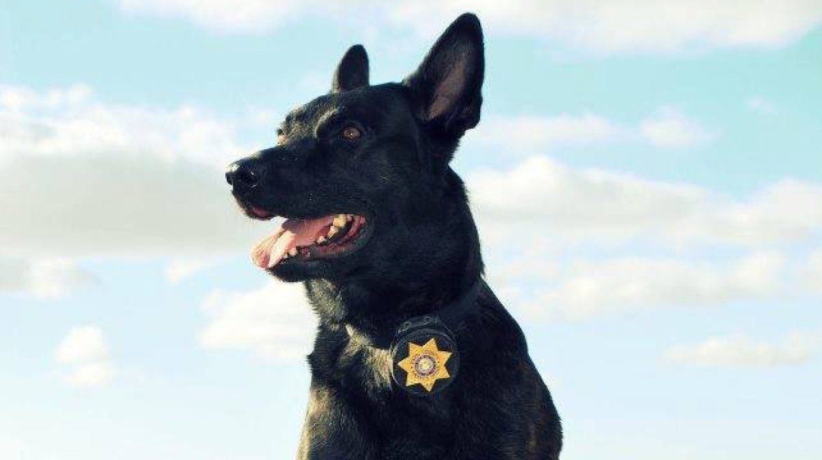 Tactical Dog's photo on #LivePD