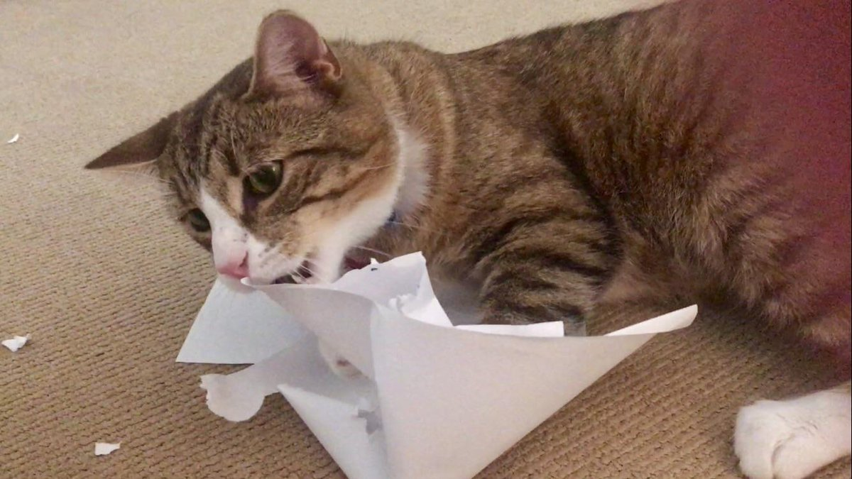 #Article50Excuses &#39;The cat ate the other 49 so I didn&#39;t get a chance to read them!&#39;  <br>http://pic.twitter.com/CmmbC7MM0T