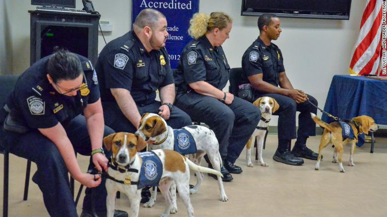 A brigade of beagles helps the US save billions at America's busiest airports https://t.co/bF4uRhnSy1 https://t.co/OIpMOtW9ve