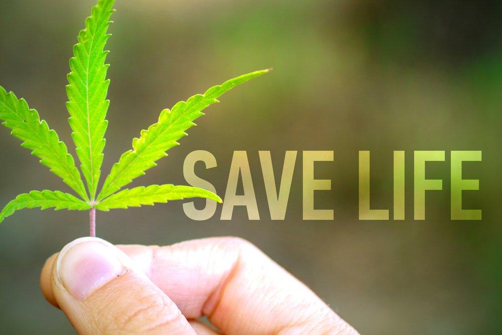 研究表明大麻合法化每年将拯救5万人的生命!