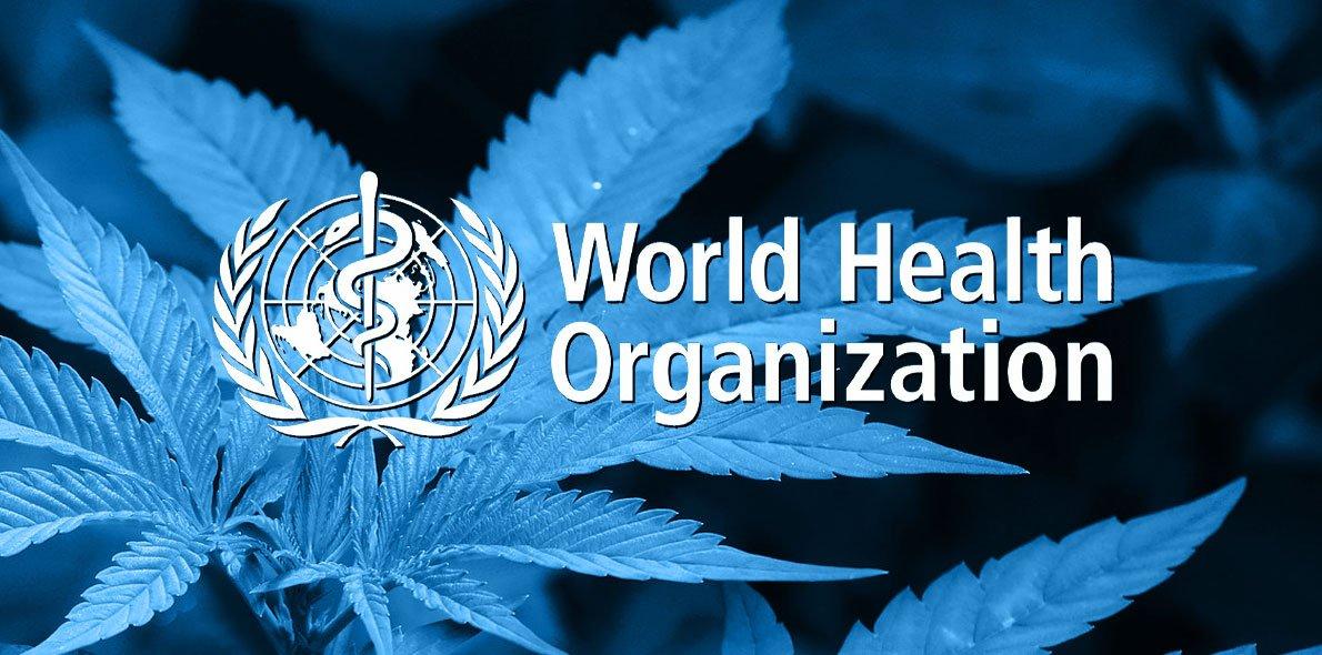世卫组织建议将大麻从危险麻醉药品清单中删除!