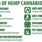 Image for the Tweet beginning: #Hemp is from same #Plant