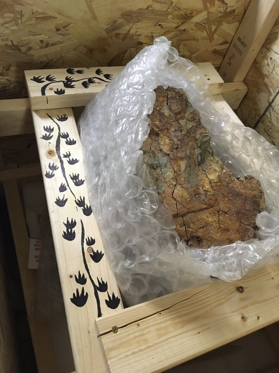 This #fossilfriday we celebrate the arrival of the largest collection of fossiliferous stumps from the Carboniferous of Nova Scotia since the days of Lyell and Dawson. So much to be discovered. Stay tuned! #CarletonNovaScotiaPaleo @JogginsFossils #MaddinLab<br>http://pic.twitter.com/CT6Ufj7HNp