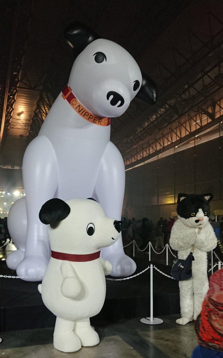 Mary🌠現場主義🙋 3/16 ビクターロック祭り→3/23 渋谷と吉祥寺→3/31 R30仙台's photo on #ビクターロック祭り