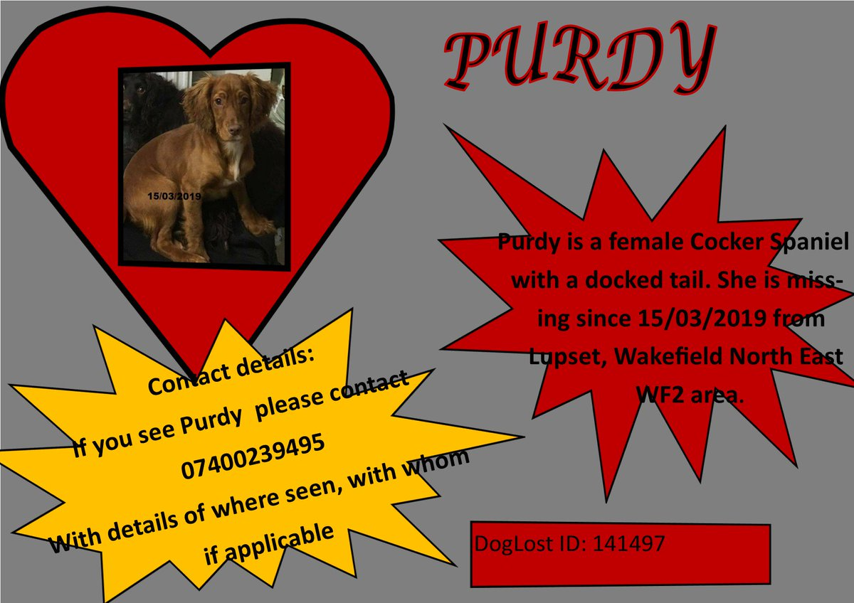 🐾#findPurdy female cocker spaniel with docked tail🐾  📅#PURDY missing 15/03/2019 #Lupset #Wakefield North East WF2📅  👀Have you seen #PURDY? Anyone in your nieghbourhod acquired a dog like #PURDY recently? Any info will be treated with the strictest confidence