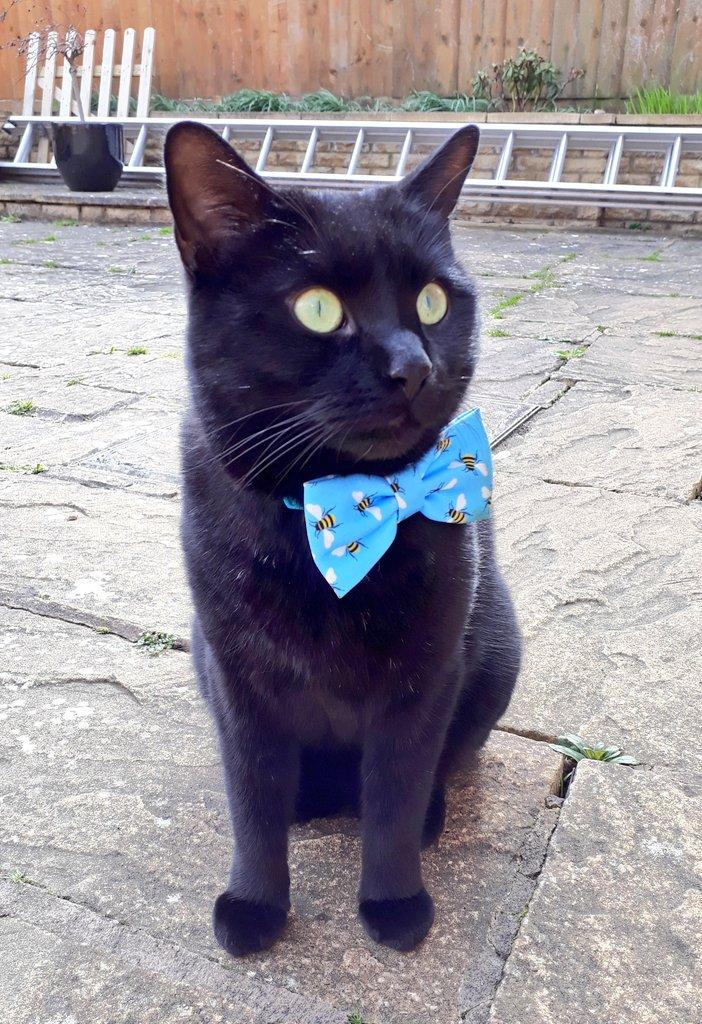 PushkinPanfur's photo on #Caturday
