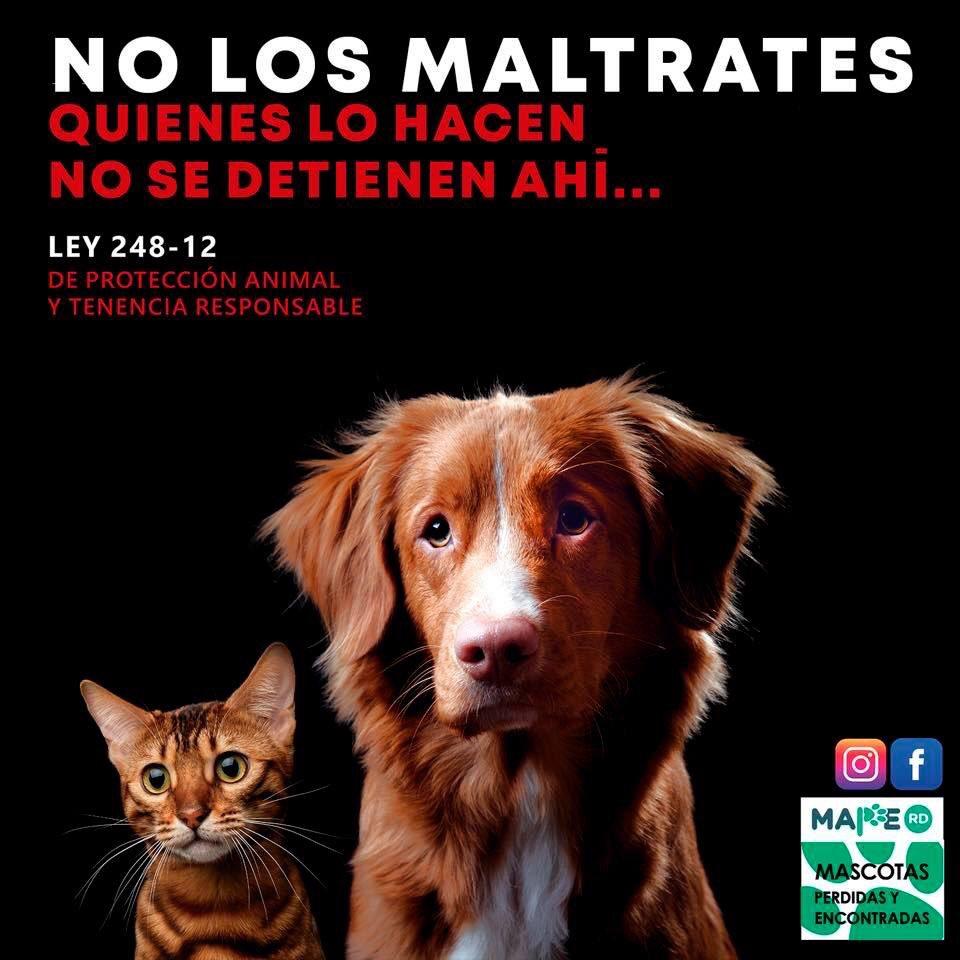 """🐬⭐️🦋Marlen Estrella🐬⭐️🦋 در توییتر """"LAS PERSONAS QUE SON VIOLENTAS CON  ANIMALES RARA VEZ SE DETIENEN AHI...Ley -248-12 de Protección Animal y  tenencia responsable #seamosmasanimales #ellossienten #nolosmaltrares…  https://t.co/EI8xUuyKe0"""""""