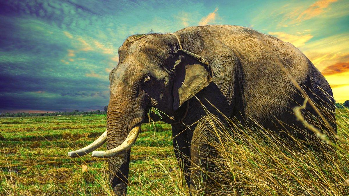 Ultrahdwallpapers On Twitter Elephants Hd Wallpapers