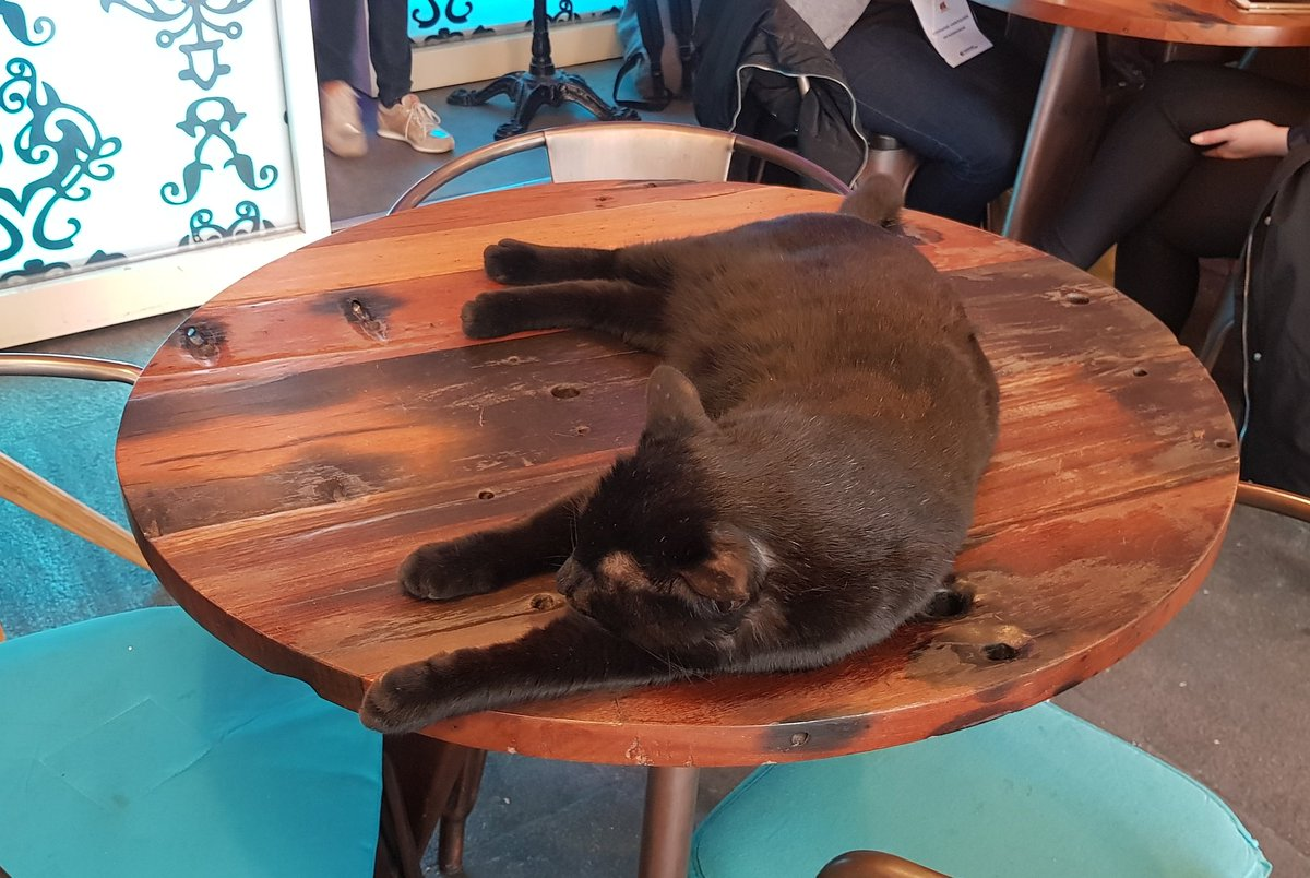 @thecatreviewer Unintentionally found a cat cafe in Rouen, the cat took up an entire table and couldn&#39;t care less! Clearly he was there first! 9/10 chonk 10/10 stubborn  oh and the food was amazing #crepes #france<br>http://pic.twitter.com/4L4DsrgQqi &ndash; à Cosy Lunch