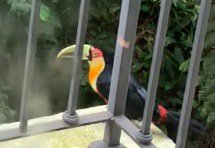 Suddenly a nice bird turned up on my hotel balcony in São Paulo. A nice welcome to Brazil!