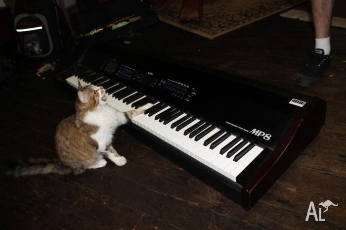 Kawai Pianos USA's photo on #Caturday