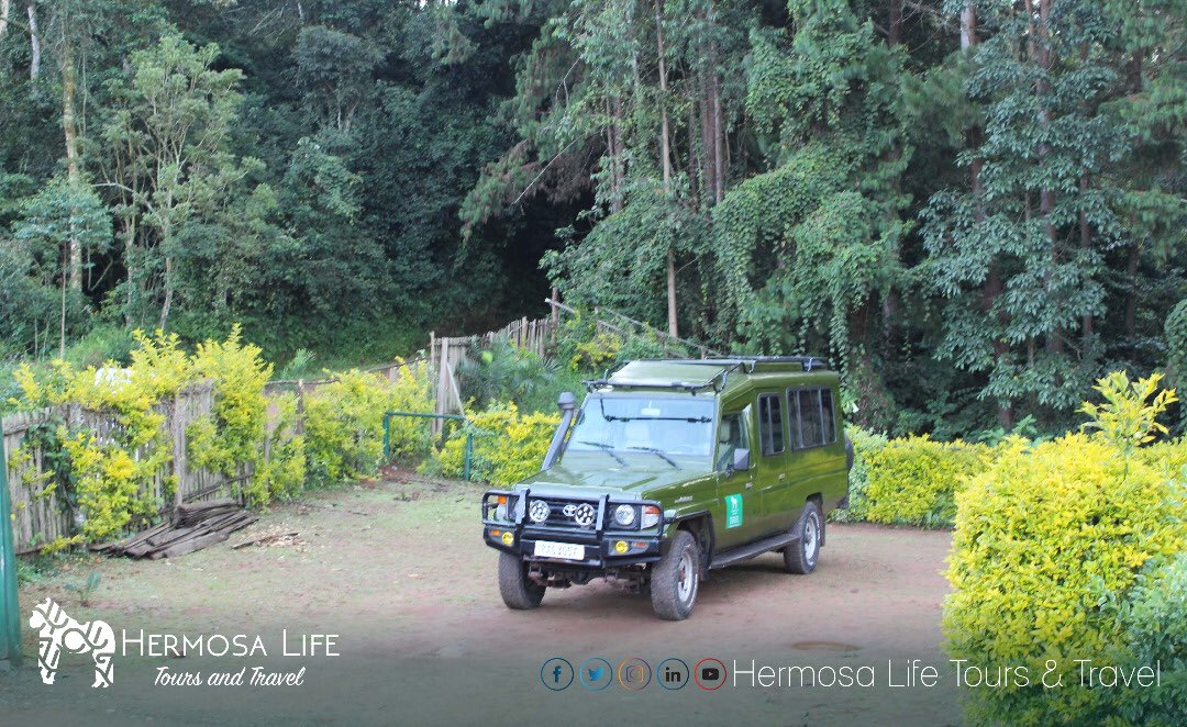 Hermosa  Life Tours and Travel connects travelers to Rwanda's best destinations #VisitRwanda #Rwandalicious #Rwandanziza #TravelRwanda #BeautifulRwanda . . . . . #Rwanda #VisitRwanda #HermosaTours #travel #tourism #traveller #best #wildlife #safaris #nature #wilderness