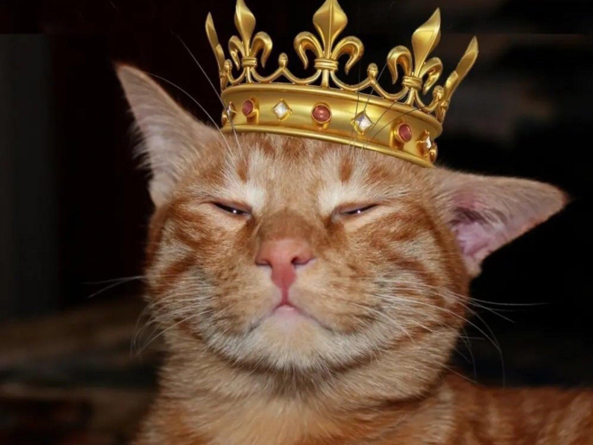 Прикольные картинки с короной