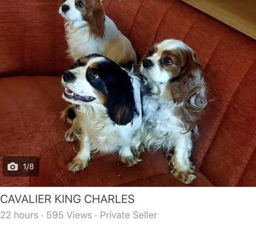 CavaliersInNeed photo