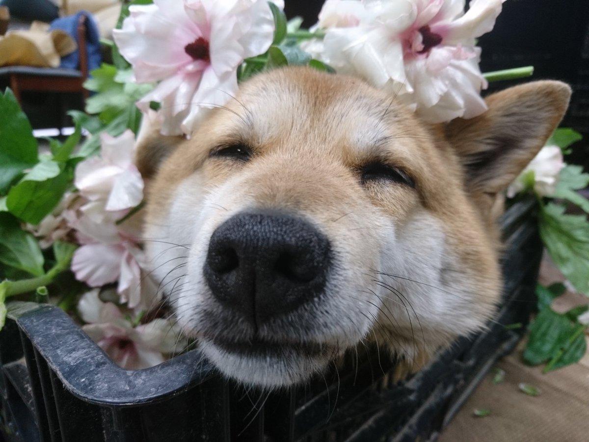 高瀬花園さんの投稿画像
