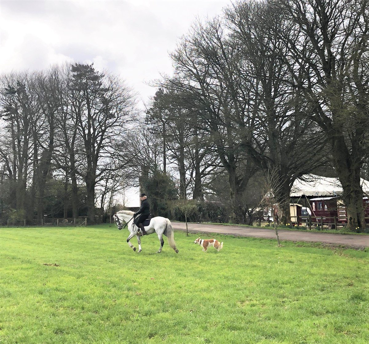 Nell riding beautiful stallion Diamond who has recently returned from his winter break. We think Nell looks just like the Giffords Circus logo with her dog Monkey following behind! #practiceeveryday #letsgetthisshowontheroad #giffordscircus<br>http://pic.twitter.com/5Y63OlSkl6