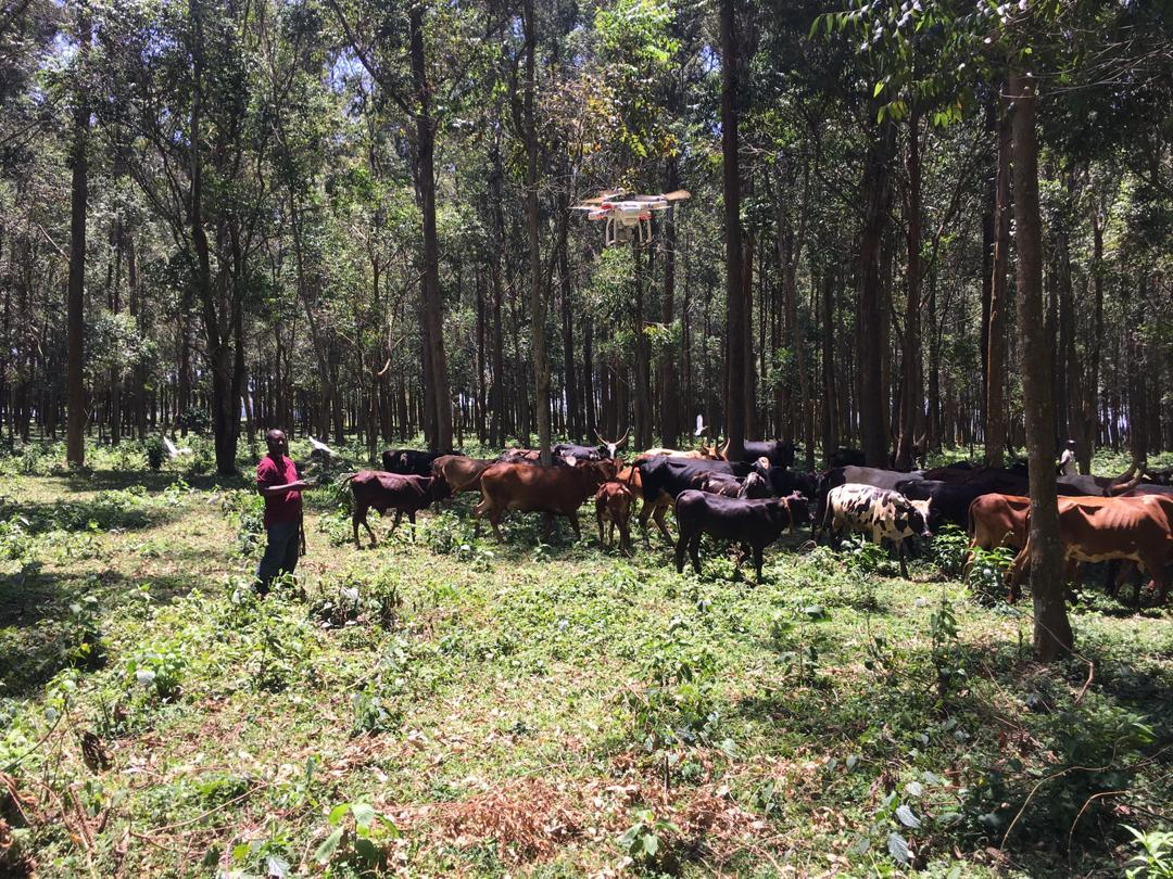 The implementation of drones in the agricultural sector will increase livestock productivity and reduce costs to help combat animal theft and disease control in herds thus enabling farmers to resolve issues quickly and efficiently. #AgriTech #JaguzaLivestockApp<br>http://pic.twitter.com/XZ6wpHwYeF