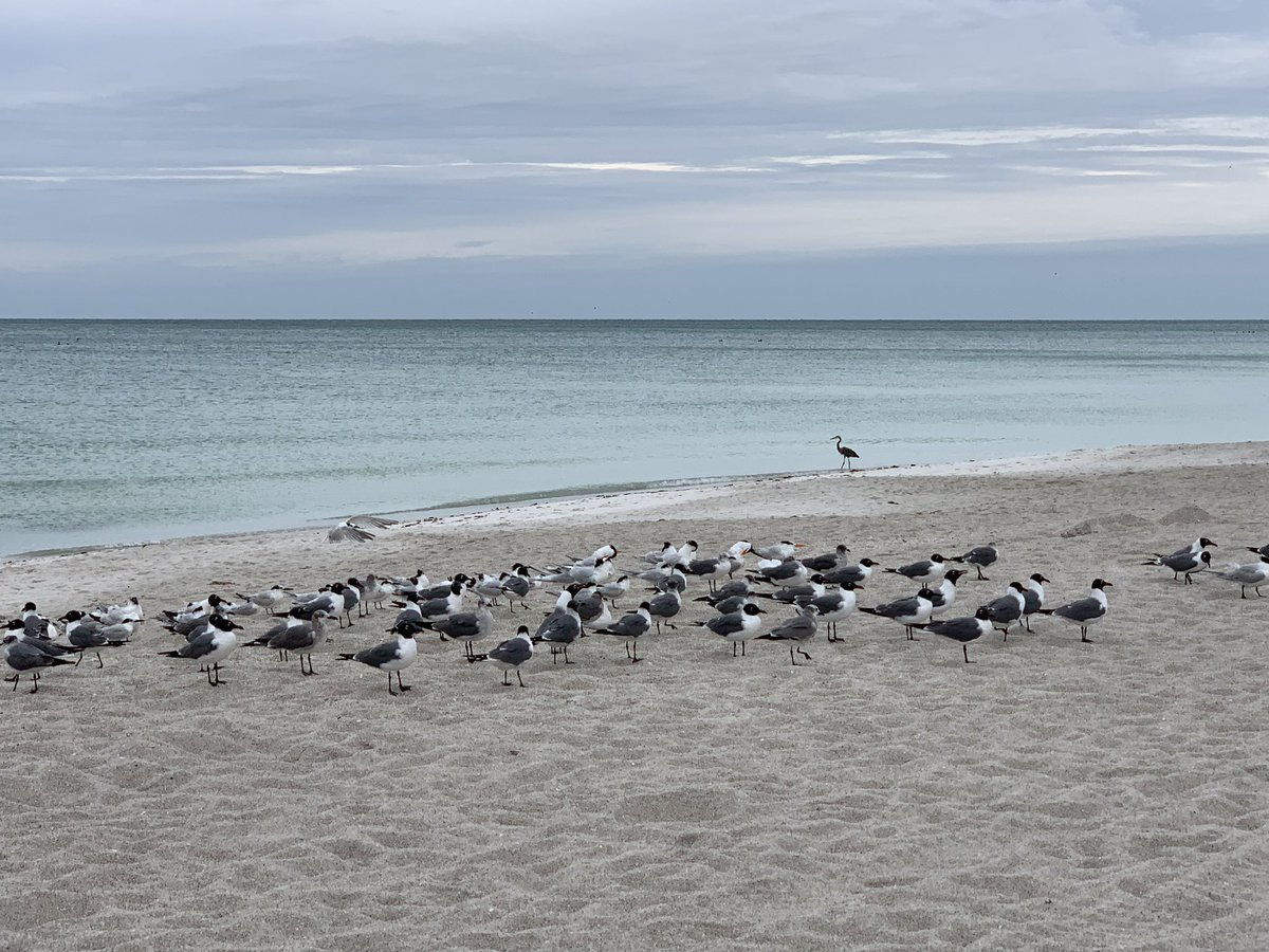 This day is for the birds #MyAnnaMaria #LoveFL #AnnaMariaIsland<br>http://pic.twitter.com/ypbhygZ1TH