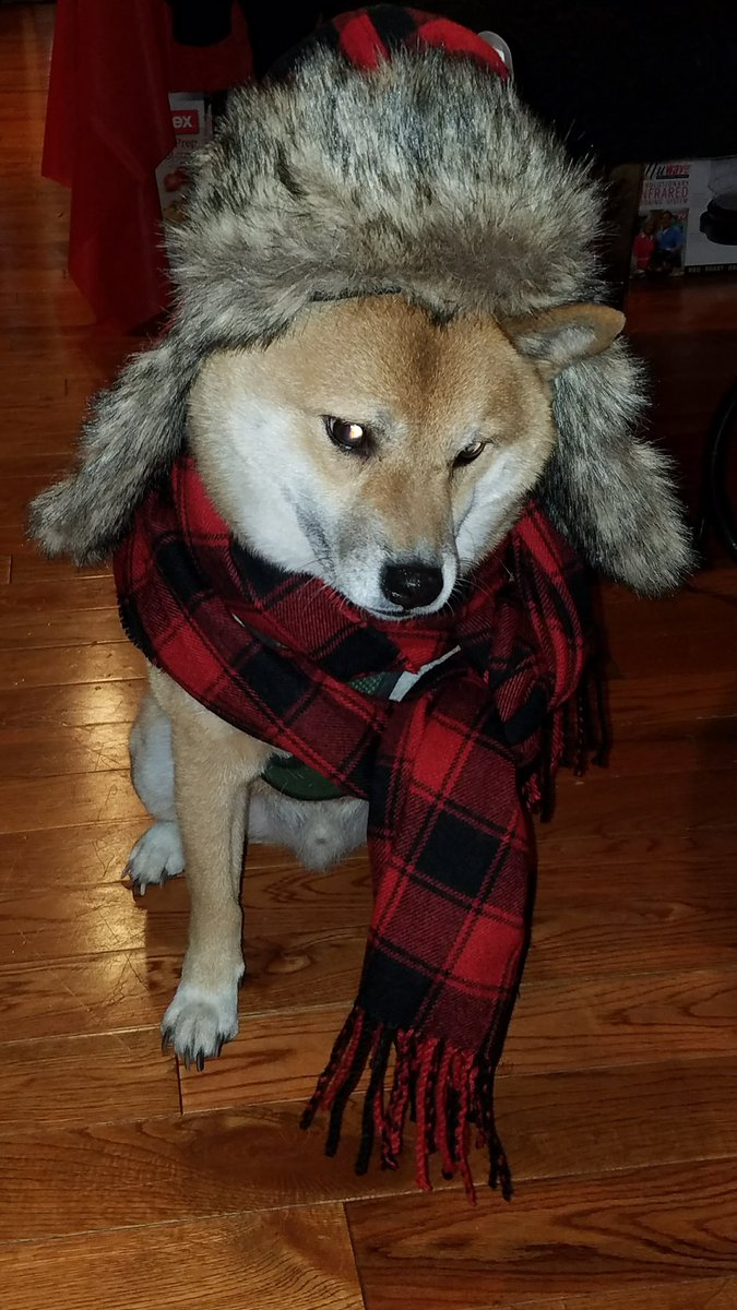 @AlexHolleyFOX29 @BobKellyFOX29 @SueSerioFox29 @FOX29philly @MikeFOX29  #fox29goodday  I&#39;ll miss keeping my #shiba warm. He, though, may not mind.<br>http://pic.twitter.com/TLMNjre1NA