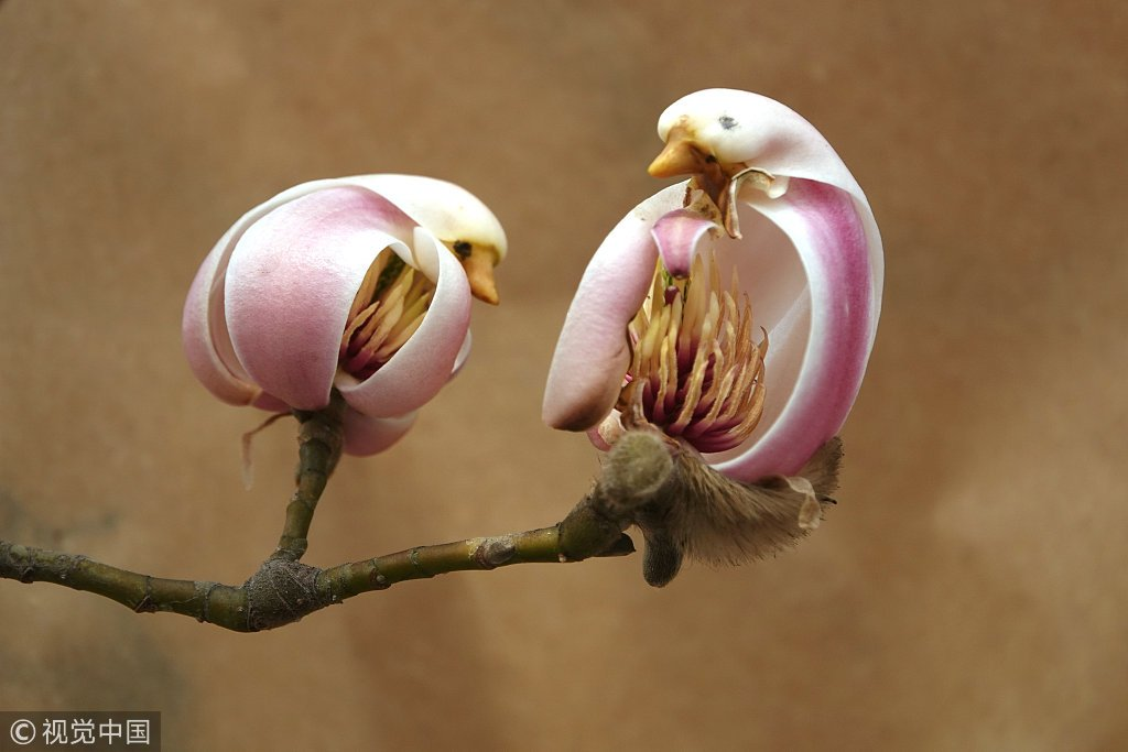 Cgtn On Twitter Flower Or Pretty Little Bird As Spring Arrives