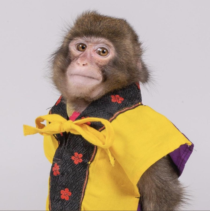 Dieses Foto von einem Affen sieht aus wie das Profilfoto von JEDEM Journalisten